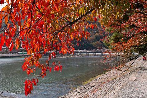 【おこしやす 秋の京都へ】