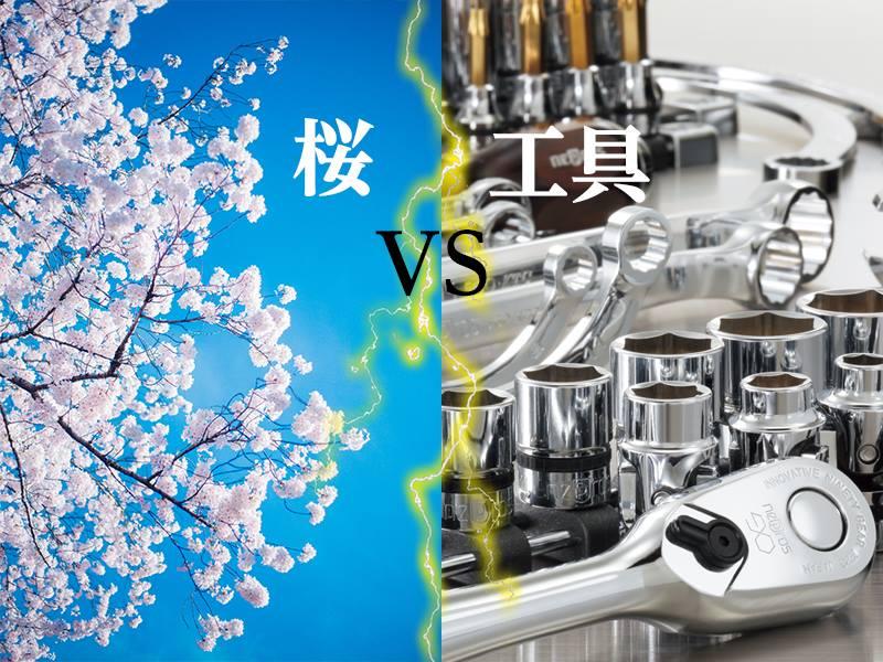 【休日にゆっくり鑑賞するなら?】桜 vs 工具